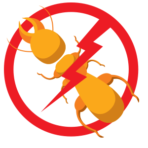 Termite Control | Frogg's Termite & Pest Control in Knoxville