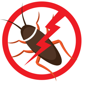 Pest Control | Frogg's Termite & Pest Control in Knoxville
