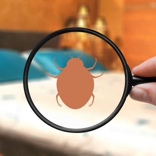 Bed Bug Service | Frogg's Termite & Pest Control in Knoxville